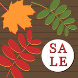 Autumn sale banner with rowan and maple leaf. Vector illustration with leaves on wooden brown background Stock Photo