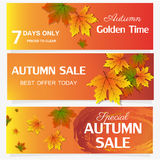 Autumn sale banner season leaf card nature background design vector illustration. Fall decoration september illustration orange colorful foliage autumn banner Stock Images
