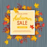 Autumn sale banner. Special seasonal discount offer. leaves at rectangular frame on a wooden table. Stock Photo