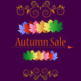Autumn sale banners. With multicolor autumn leaves.  fall poster background. Layout for discount labels, flyers and shopping Royalty Free Stock Image