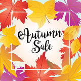 Autumn Sale. Calligraphy inscription and Autumn leafs  frame. Fall leaves Retro design. Thanksgiving Holiday Sale banner. Vector illustration for Thanksgiving Stock Images