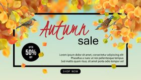 Autumn Sale Design Photos stock