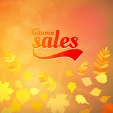 Autumn sale design template. Royalty Free Stock Photo