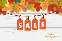 Autumn Sale-Fahnenhintergrundvektor mit den orange und grünen Fallblättern mit hängendem Verkaufsumbau im weißen hölzernen Hinter vektor abbildung