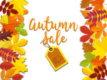 Autumn sale. Fall sale design. Can be used for flyers, banners or posters. Vector illustration with colorful autumn Royalty Free Stock Image