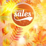Autumn sale fall yellow leaves nature background. Royalty Free Stock Image
