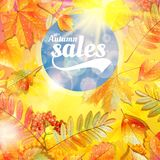 Autumn sale fall yellow leaves nature background. Stock Photo