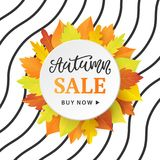 Autumn Sale Fashionable Banner Template with Colorful Fall Leaves Royalty Free Stock Photos