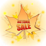 Autumn sale in leaf Stock Photography