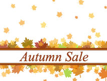 Autumn sale leaves background Stock Photography