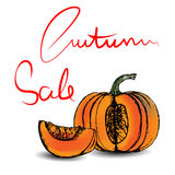 Autumn Sale Lettering and hand drawn pumpkin. Vector illustration Royalty Free Stock Photos