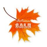 Autumn sale on maple leaf Royalty Free Stock Photo