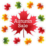 Autumn Sale on maple leaf Royalty Free Stock Images