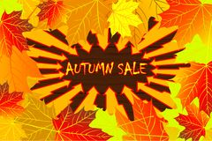 Autumnal leaf of maple. Autumn sale - maple leaves - vector background, Autumnal leaf of maple, Acer Stock Image