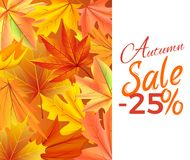 Autumn Sale -25 off Icon Vector Yellow Foliage. Autumn sale -25 off sign on white with yellow foliage. Vector illustration with orange leaves background, fall Stock Photo