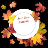 Autumn sale poster. Autumn dessing. royalty free stock photography