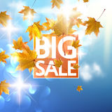 Autumn Sale poster with gold Maple leaves. Royalty Free Stock Image