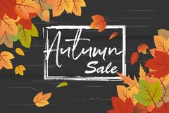 Autumn Sale text in frame with orange and green fall leaves with black wood texture background. This design element suitable for shopping sale, poster, leaflet stock illustration