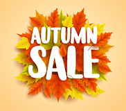 Autumn sale text vector banner with colorful seasonal fall leaves in orange background Royalty Free Stock Image