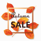 Autumn sale text vector banner with colorful seasonal fall leaves. Vector illustration. Autumn sale text vector banner with colorful seasonal fall leaves in Stock Photo