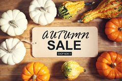 Autumn sale theme message with collection of pumpkins. On a wooden table royalty free stock image