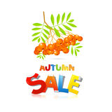Autumn Sale Theme With Rowan Berries Royalty Free Stock Photography
