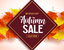 Autumn sale vector banner background with colorful maple leaves elements Royalty Free Stock Photo