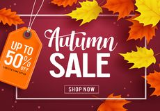 Autumn sale vector banner template with discount text and maple leaves elements royalty free illustration