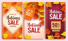 Autumn sale vector poster design set with colorful maple leaves element royalty free illustration