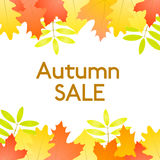 Autumn Sale - vector white background with autumn leaves. At the top and at the bottom Royalty Free Stock Image