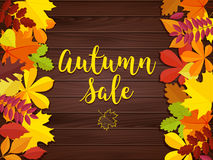 Autumn sale vintage vector typography poster on wood background. Stock Photography