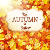 Autumn sale vntage signboard. EPS 10 Stock Image