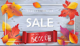 Autumn Sale voucher fall leaves trendy wood banner. Autumn Sale. Red ribbon banner discount gift card, Autumn poster. Fall realistic maple tree leafs beautiful Royalty Free Stock Images