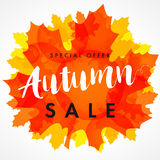 Autumn sale white banner. Fall sale design card template with lettering Special Offer 50% off shop now. Vector illustration with colorful autumn leaf and yellow Stock Photography