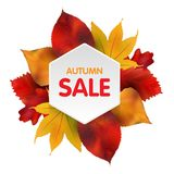 Autumn Sales Banner With Colorful-Bladeren Vector Stock Foto