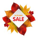 Autumn Sales Banner With Colorful-Bladeren Vector Royalty-vrije Stock Foto