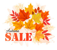 Autumn Sales Banner With Colorful Leaves. Stock Image