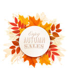 Autumn Sales Banner With Colorful Leaves. Royalty Free Stock Photos