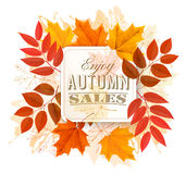 Autumn Sales Banner With Colorful Leaves. vector illustration