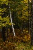 Autumn Sampler Stockbilder