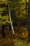 Autumn Sampler. A sampling of mixed hardwoods and ferns in early autumn in Vermont Stock Images