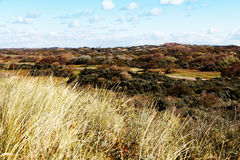 Autumn Sand Dune Stock Image