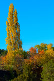 Autumn in Santa Fe Royalty Free Stock Image