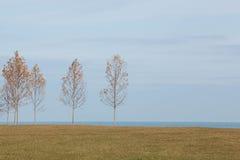 Autumn Saplings en las orillas del lago Michigan en Chicago Foto de archivo