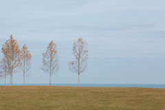 Autumn Saplings on the shores of Lake Michigan in Chicago Stock Photo