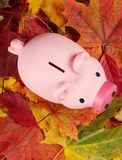 Autumn savings Stock Photo