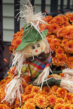 Autumn Scarecrow in Mums Stock Photography