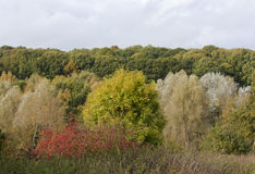 Autumn Scene. Wood in England in autumn royalty free stock photo