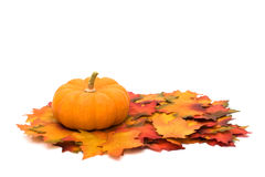 Autumn scene Royalty Free Stock Images