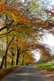 Autumn scene. On a country lane in Derbyshire UK stock photos